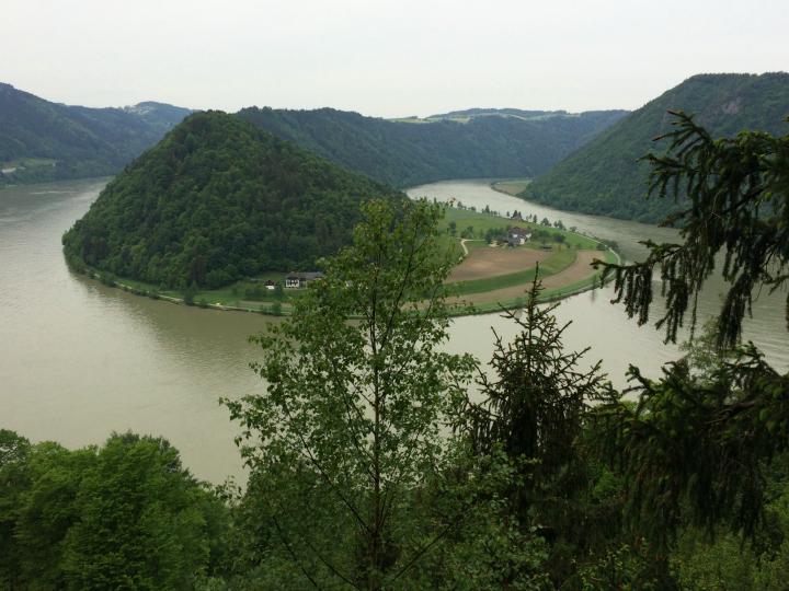 Donauschlinge Donauslyngen Østrig