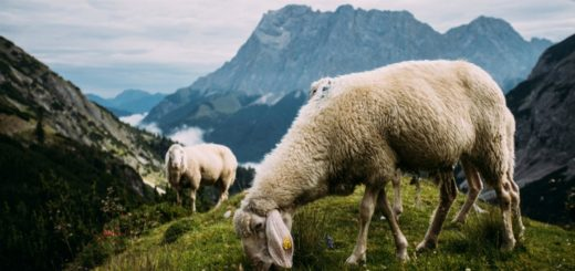 Uld uldprodukter friluftsliv uldens egenskaber