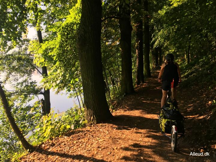 Elben cykelrute naturoplevelse natur