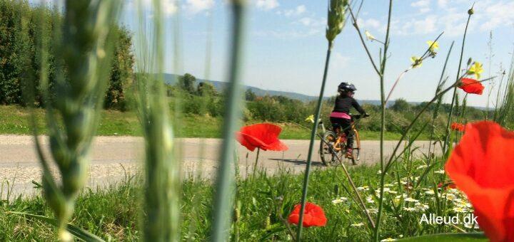 Cykelferie bæredygtig ferieform klimavenlig ferie