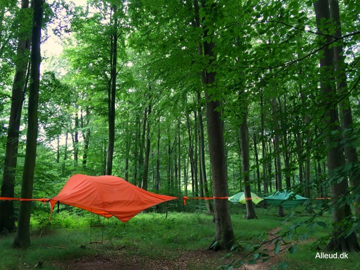 Flyvende telte flyvende telt skov overnat natur