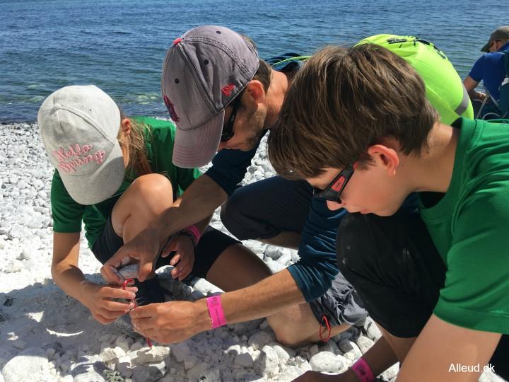 Møns Klint fossil fossiljagt Cykeltur Nationalrute 8 Østersøruten