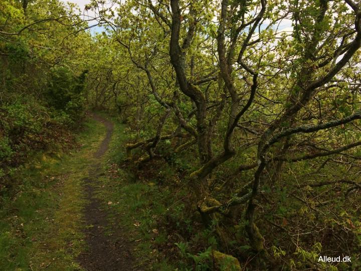 Egekrat natur landskab vandring Kyststien