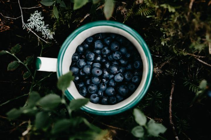 Blåbær Dollerup Bakker