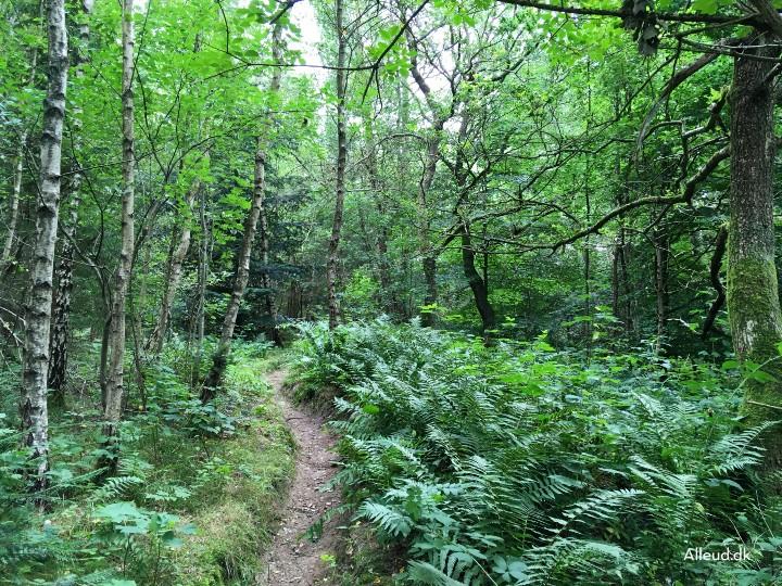 Tæt skov