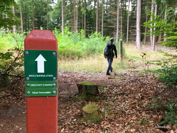 Ebeltoft etapen Mols Bjerge Stien Vandring vandretur